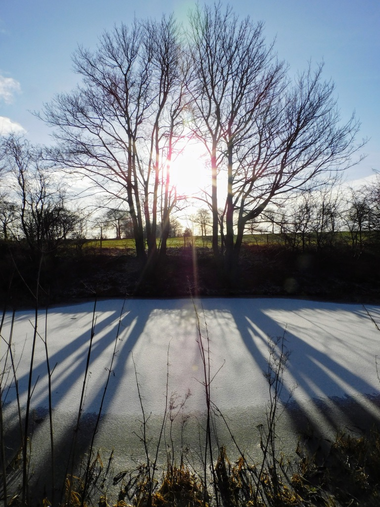 two trees centred in the the photo sun shines through in between the photos the shadows reflect on the ice of the frozen canal below